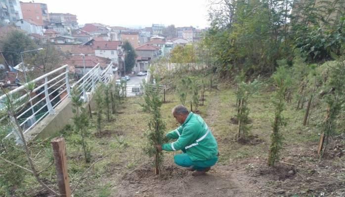 İzmit'te Park Bahçe Çalışmaları