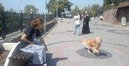 Çevreci Köpekten Önemli Mesaj