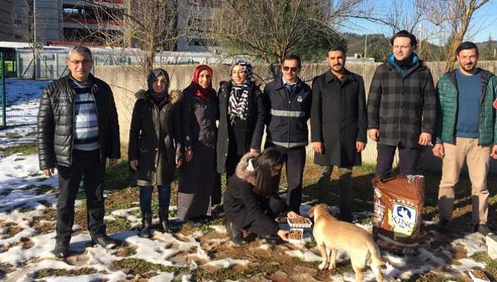 TÜRGED ve İzmit Belediyesi Sokak Hayvanlarını Unutmadı