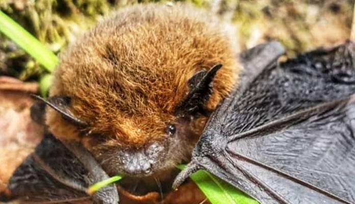Yarasalar Kış Uykusuna Ormanya'da Yatacak
