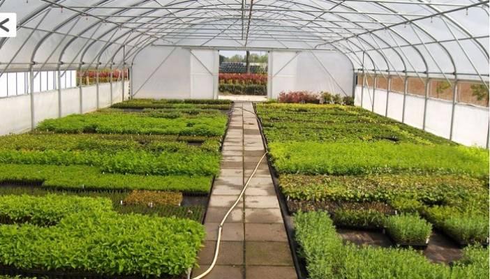 İzmit Belediyesi en az maliyetle daha yeşil bir İzmit için sera kuruyor